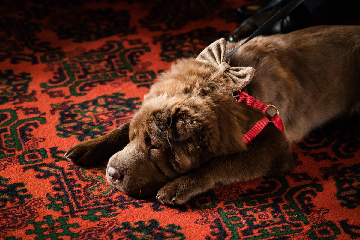 Dog at a wedding at Stoke Rochford Hall, Grantham