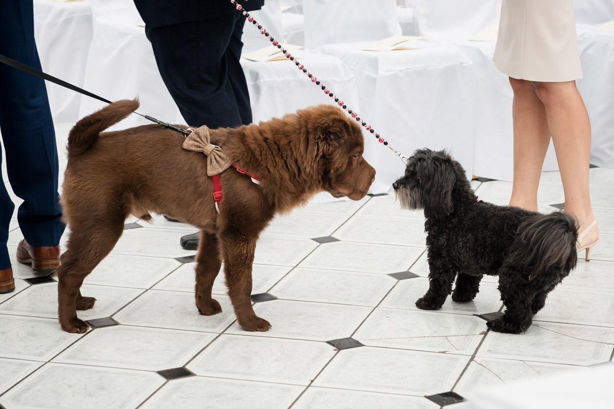 Dogs greeting each other at dog friendly wedding venue Stoke Rochford Hall, Grantham
