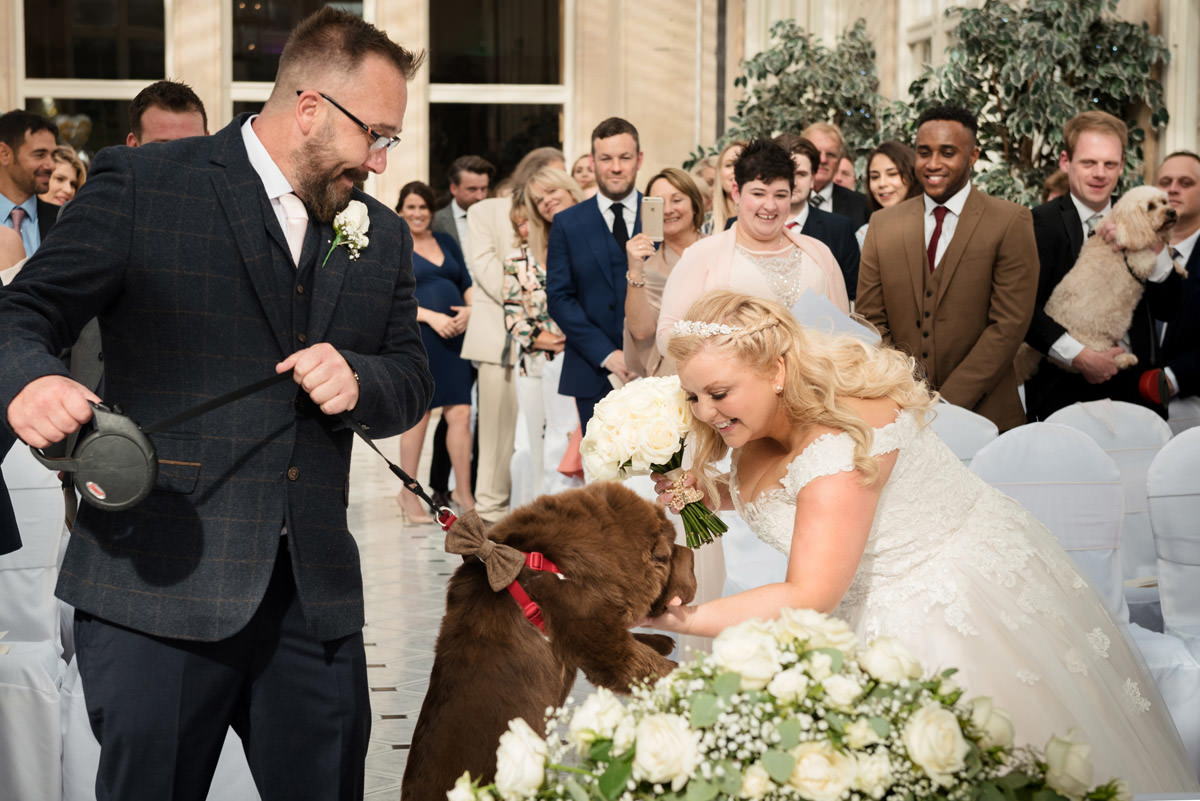 Bride greeting her dog at the start of the wedding ceremony at Stoke Rochford Hall, Grantham