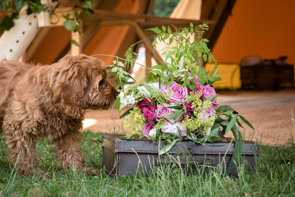A dog smelling a wedding bouquet at Pipewell Hall