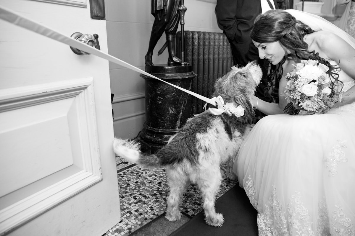 Dog greeting the bride at a wedding at Kilworth House