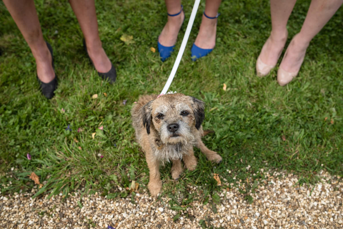 Patterdale Terrier dog as a flower girl at Maidwell church in Northampton
