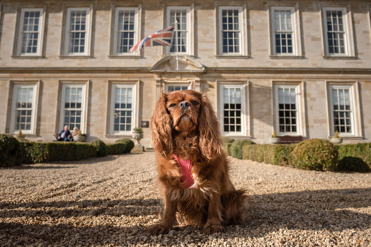 A dog at Stapleford Park - a dog friendly wedding venue in Leicestershire