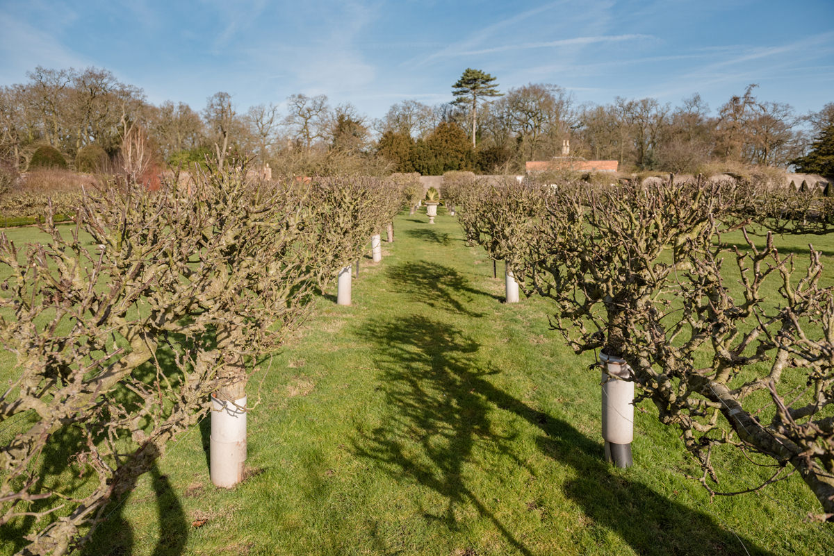 Fruit trees in the walled garden at Stapleford Park
