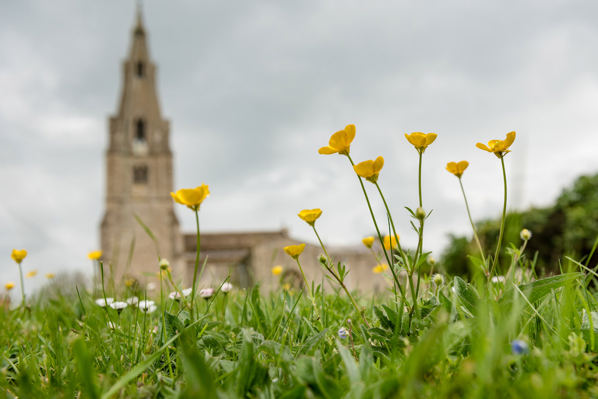 Buttercups at All Saints church in Polebrook near Oundle