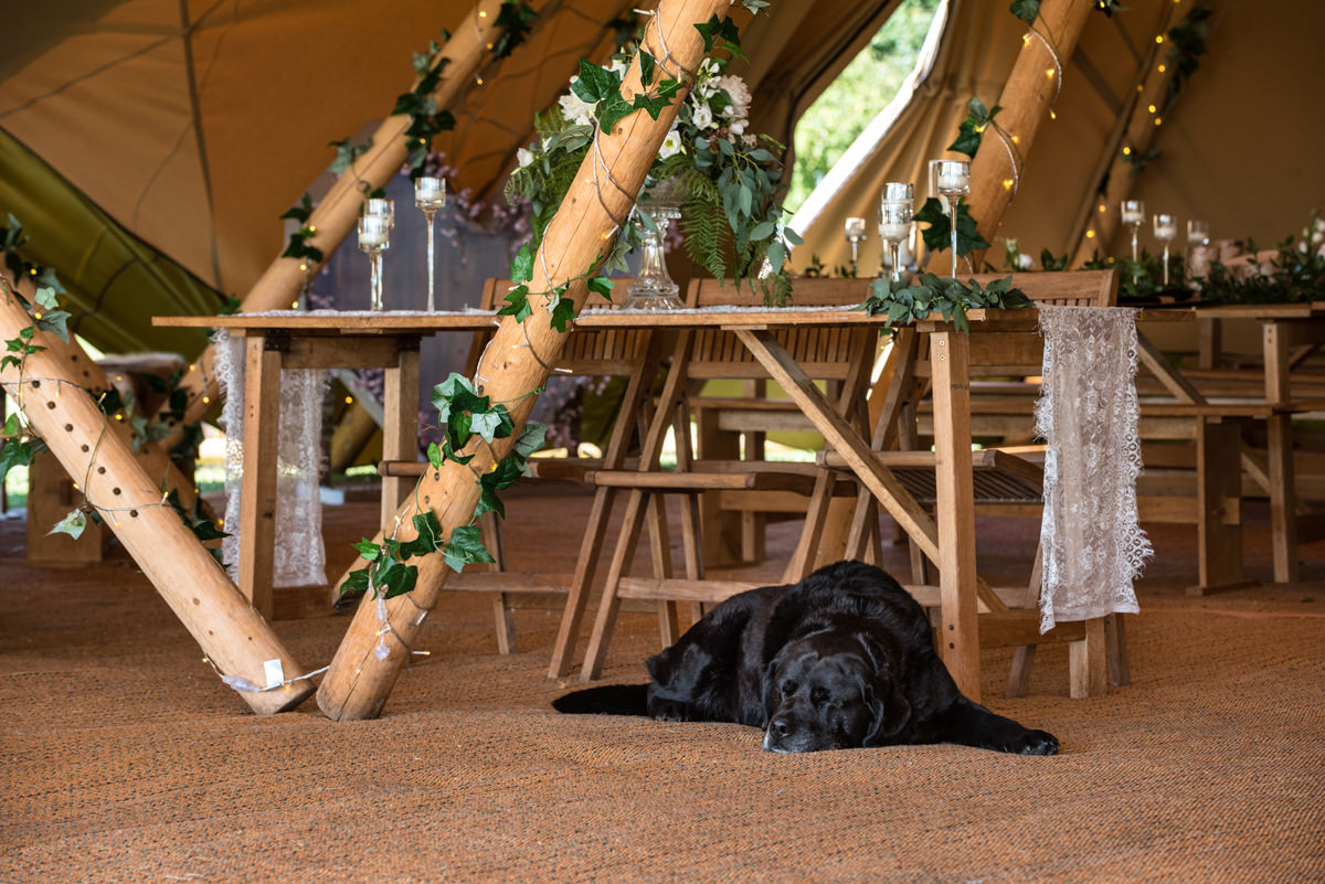 A dog asleep under the table in a tipi at Sywell Grange in Northampton