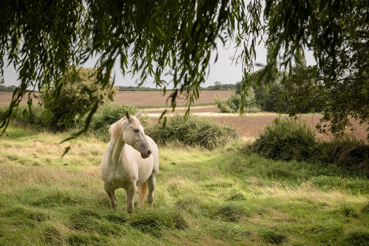 White horse in Polebrook