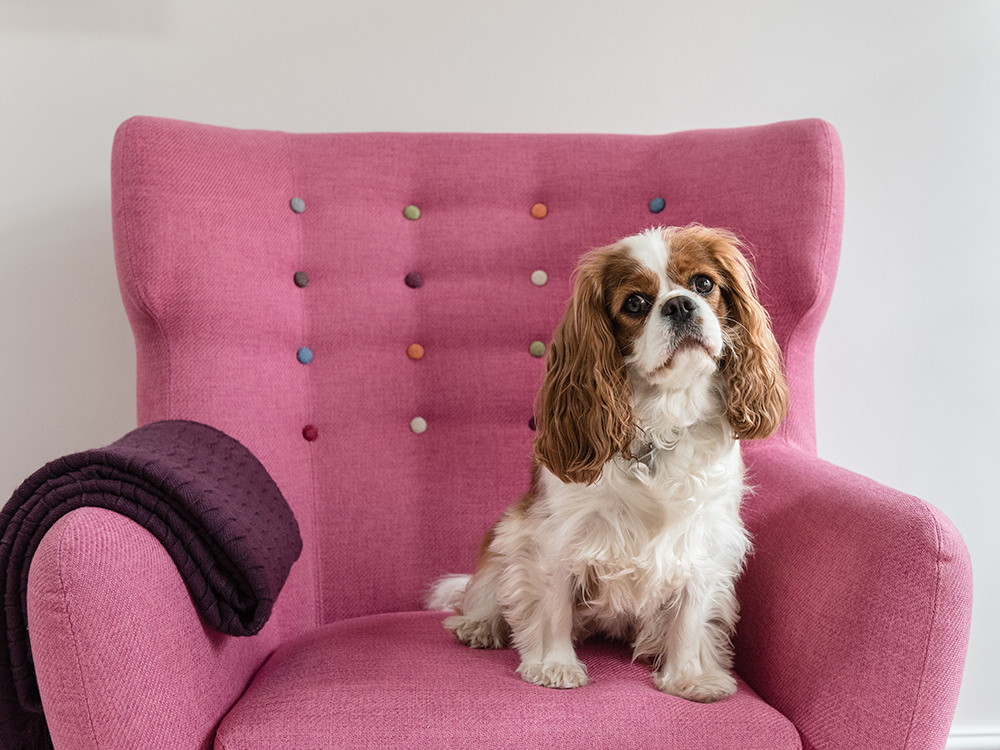 Poppy, Chief Morale Officer at Sarah Vivienne Photography