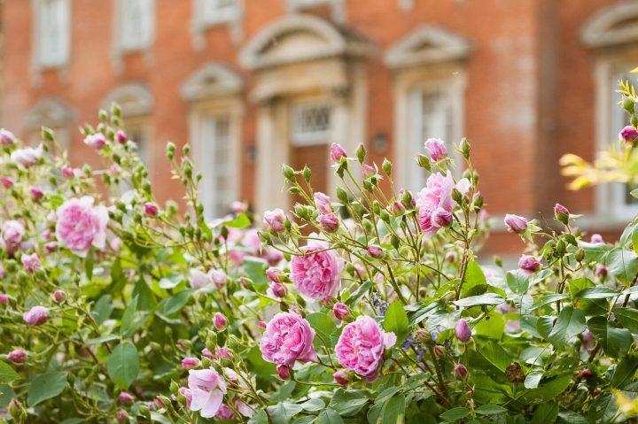 Roses in front of Kelmarsh Hall